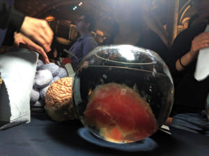 a gel brain in a clear bowl of water