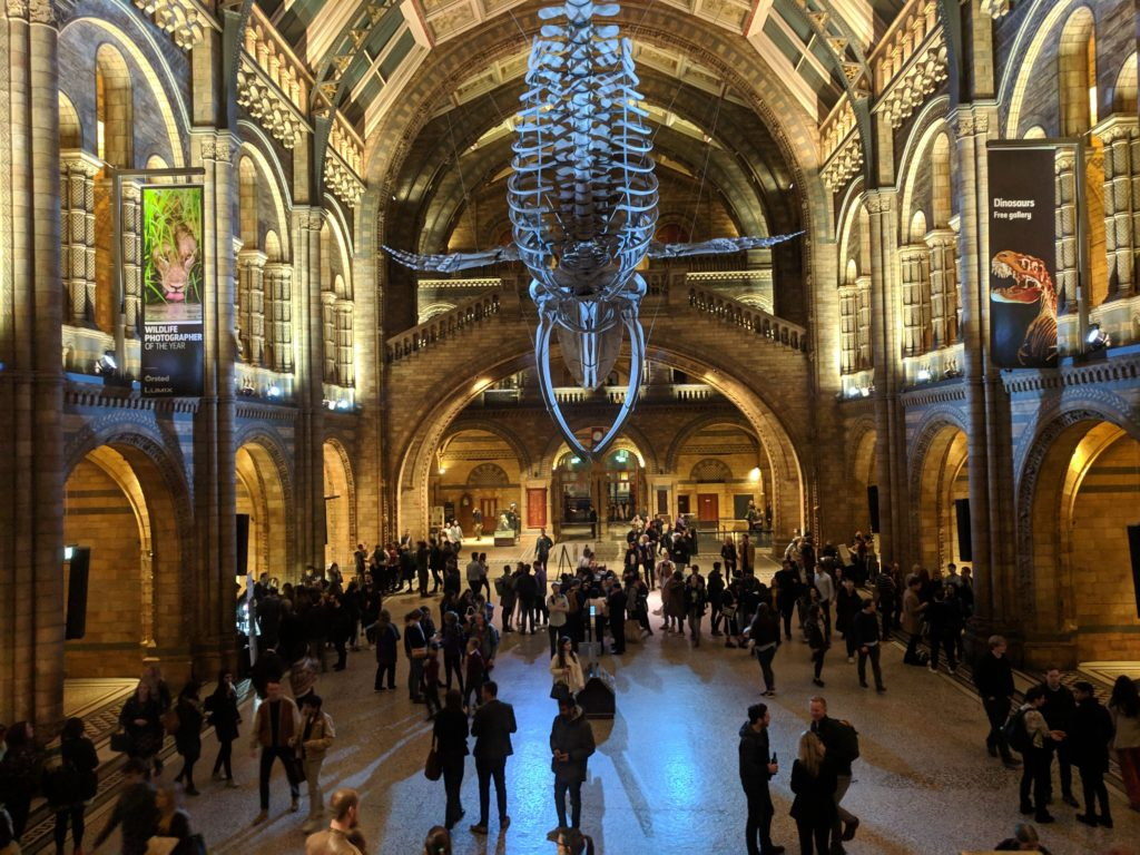 The Natural History Museum grand foyer with whale bone structure hanging overhead